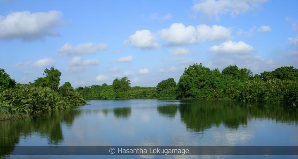 Muthurajawela mangrove and wetland